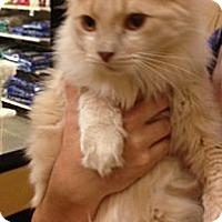 Adopt A Pet :: Joey - Monroe, GA