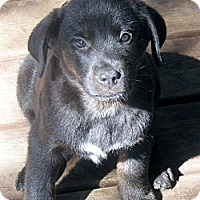 Adopt A Pet :: Charlie - Rigaud, QC