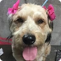 Adopt A Pet :: Charity - Santa Ana, CA