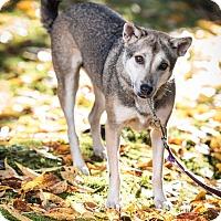 Adopt A Pet :: Betty - Pitt Meadows, BC