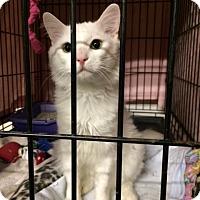 Adopt A Pet :: Snowball - Byron Center, MI