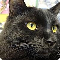 Adopt A Pet :: Fritz - Westlake Village, CA