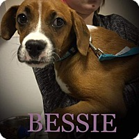 Adopt A Pet :: Bessie - Island Heights, NJ