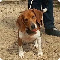 Adopt A Pet :: Maria Callas - Rayville, LA