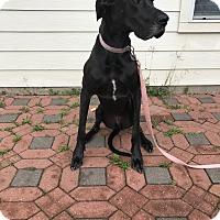 Adopt A Pet :: Lucy - Austin, TX