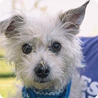 Adopt A Pet :: Skipper - San Leon, TX