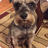 Adopt A Pet :: Cooper - Royal Palm Beach, FL