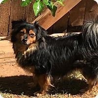 Adopt A Pet :: Pedro - Yukon, OK