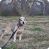Adopt A Pet :: MAYNARD - Sardis, TN