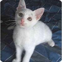 Adopt A Pet :: Whitney - Colmar, PA