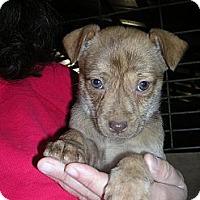 Adopt A Pet :: Lottie - Glastonbury, CT