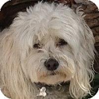 Adopt A Pet :: Rosie - La Costa, CA