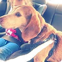Adopt A Pet :: Paul - Hamilton, ON