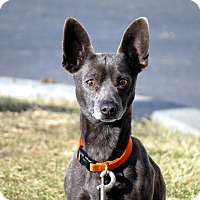Adopt A Pet :: Brody - Meridian, ID