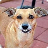 Adopt A Pet :: Margie - Lodi, CA