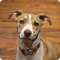 Adopt A Pet :: MacKenzie - Seattle, WA