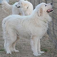 Adopt A Pet :: Beowulf - Kyle, TX