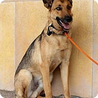 Adopt A Pet :: Hansel - Albuquerque, NM