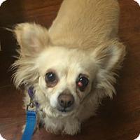 Adopt A Pet :: Juno - Oak Ridge, NJ