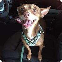 Adopt A Pet :: Tate - Fort Lauderdale, FL