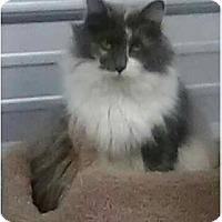 Adopt A Pet :: Princess - Newtown, CT