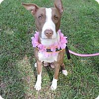 Adopt A Pet :: Corona - Greenwood, SC