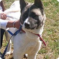 Adopt A Pet :: Jaydora - East Amherst, NY