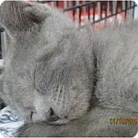 Adopt A Pet :: Bert - Sterling Hgts, MI