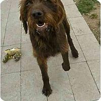 Adopt A Pet :: Vixie - Meridian, ID