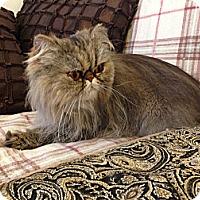 Adopt A Pet :: Ruby - Beverly Hills, CA
