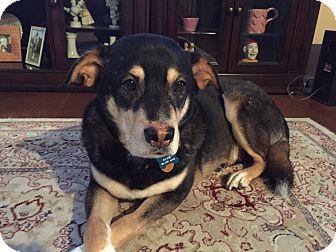 Labrador Retriever Mix Dog for adoption in Sagaponack, New York - Jackie