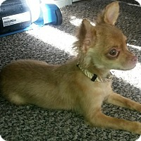 Adopt A Pet :: Charlie - Las Cruces, NM
