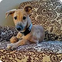 Adopt A Pet :: Autumn - Tucson, AZ