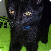 Adopt A Pet :: Little Jack - Hamburg, NY