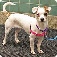 Adopt A Pet :: TIDBIT - San Francisco, CA