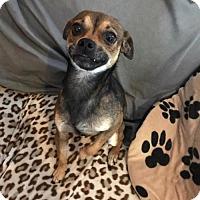 Adopt A Pet :: Bobby Tyler - Longview, TX