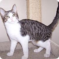 Adopt A Pet :: K-Herrley2-Priscilla - Colorado Springs, CO