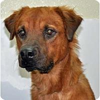 Adopt A Pet :: Oso - Port Washington, NY