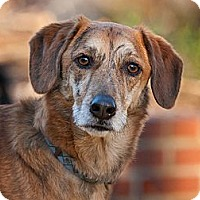 Adopt A Pet :: Bosley - Alexandria, VA