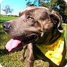 Adopt A Pet :: Grabold - N
