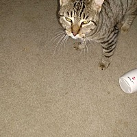 Adopt A Pet :: Tyler - Covington, PA