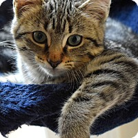 Adopt A Pet :: Joy - Mount Pleasant, SC