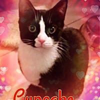 Adopt A Pet :: Cupcake - Bedford Hills, NY