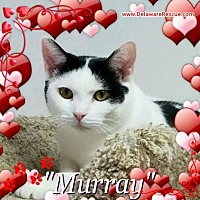 Adopt A Pet :: Murray - Seaford, DE