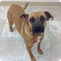 Adopt A Pet :: Leia Bee - Urbana, OH