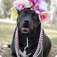 Adopt A Pet :: Leilani - New Smyrna Beach, FL