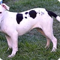 Adopt A Pet :: Princess - Simi Valley, CA