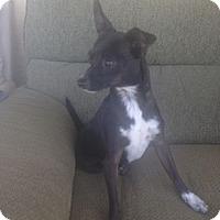 Adopt A Pet :: Poppy - Oceanside, CA