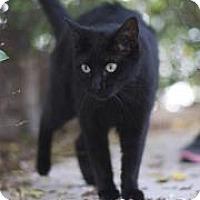 Adopt A Pet :: Buddha - Belle Chasse, LA