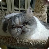 Adopt A Pet :: Daphne - Columbus, OH